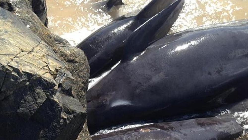 Imagen de las ballenas varadas en Bunbury