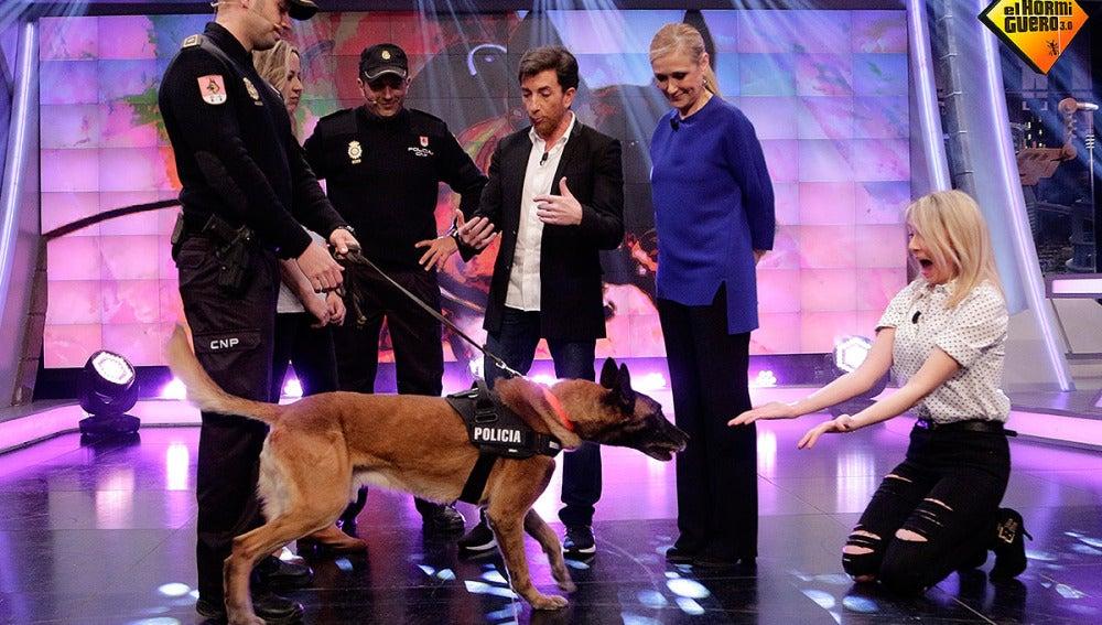 Danko, el perro policía en El Hormiguero 3.0