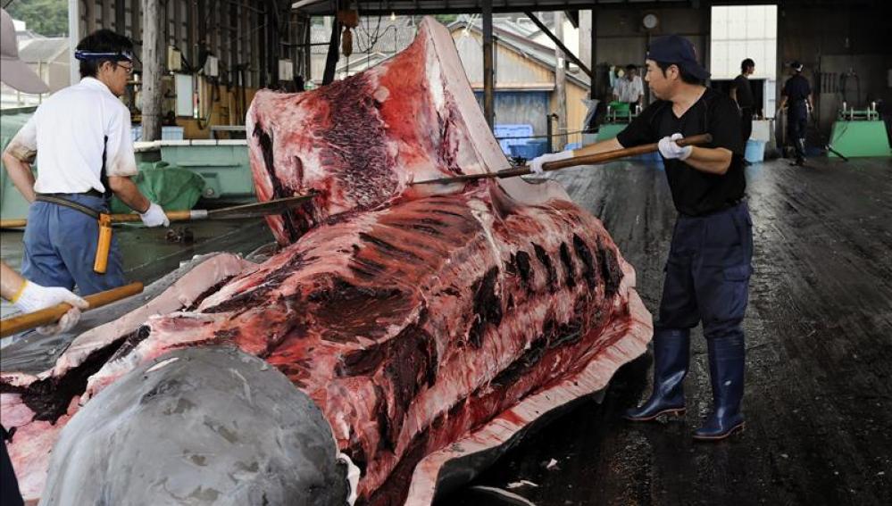 Varios pescadores quitando la piel a una ballena en Wada Port, Japón. EFE/Archivo
