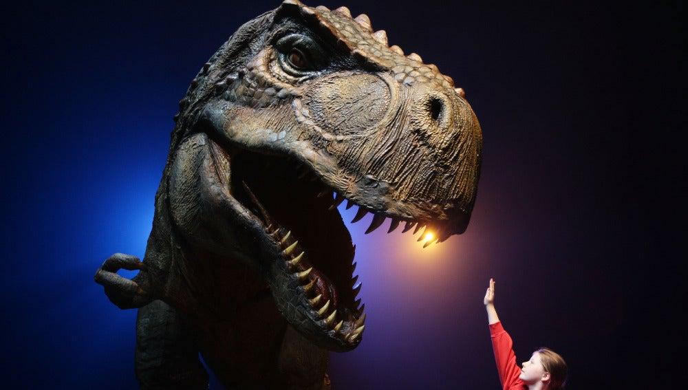 Un niño observa una maqueta de dinosaurio