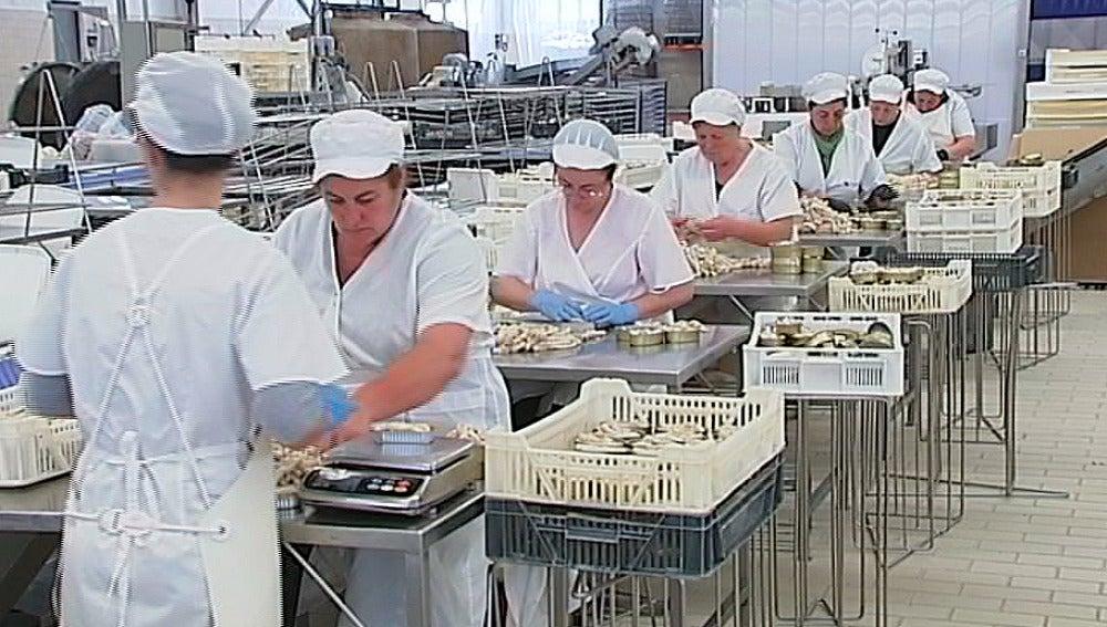 Fábrica de conservas en España