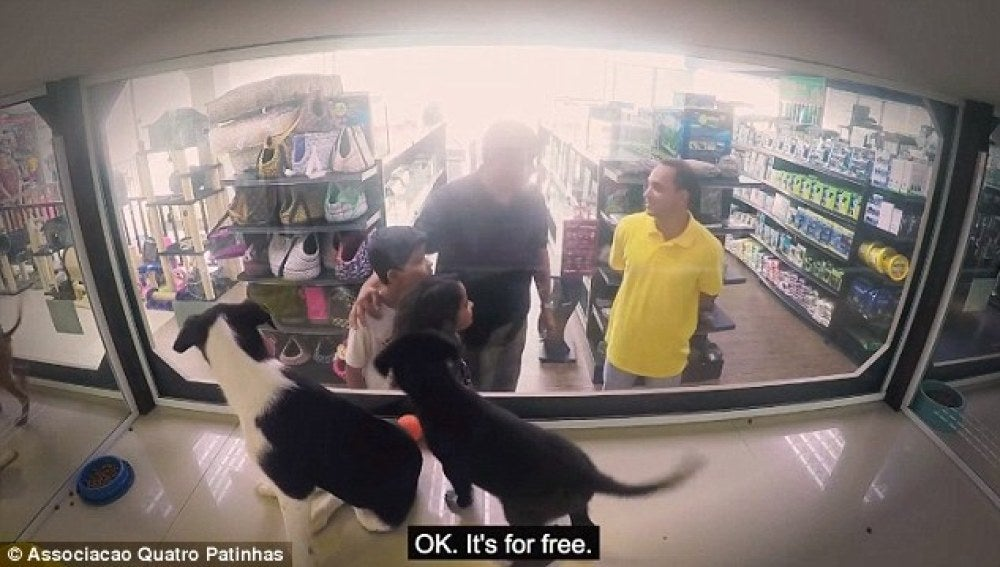 Perros de adopción en el escaparate
