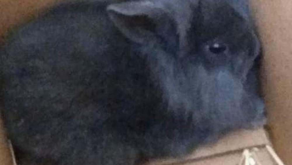 El conejo Allan