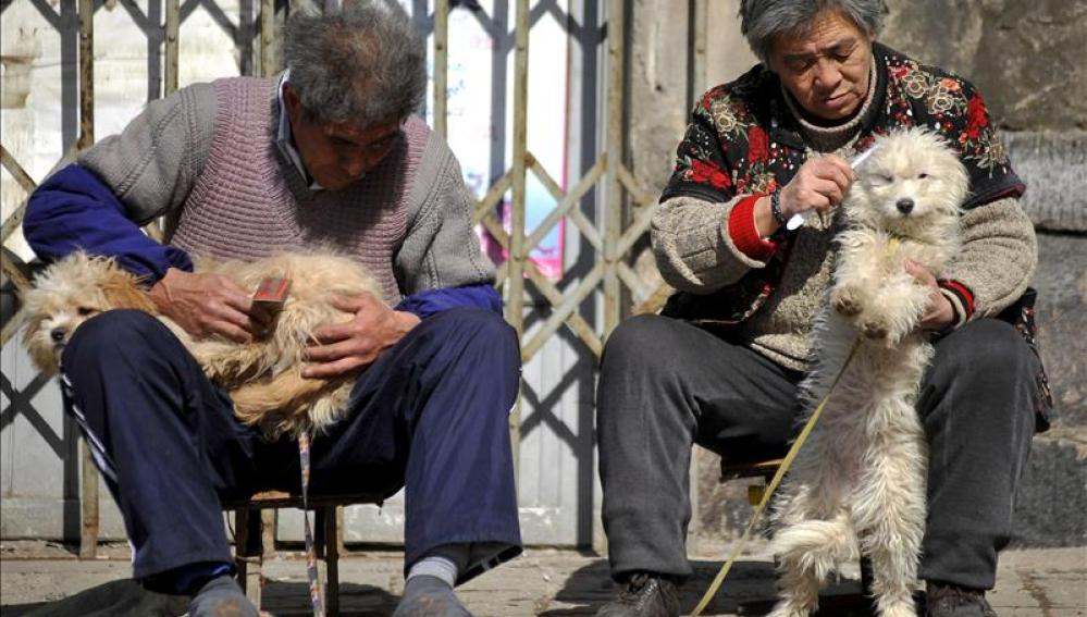 Dos ancianos chinos peinan a sus mascotas en la calle.