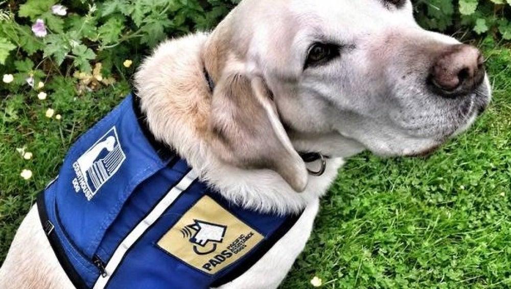 Caber, el perro policía que ayuda a niños que han sufrido abusos