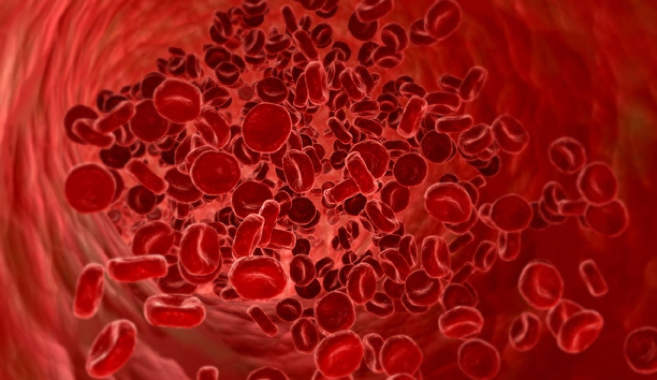 Los glúbulos rojos de la sangre