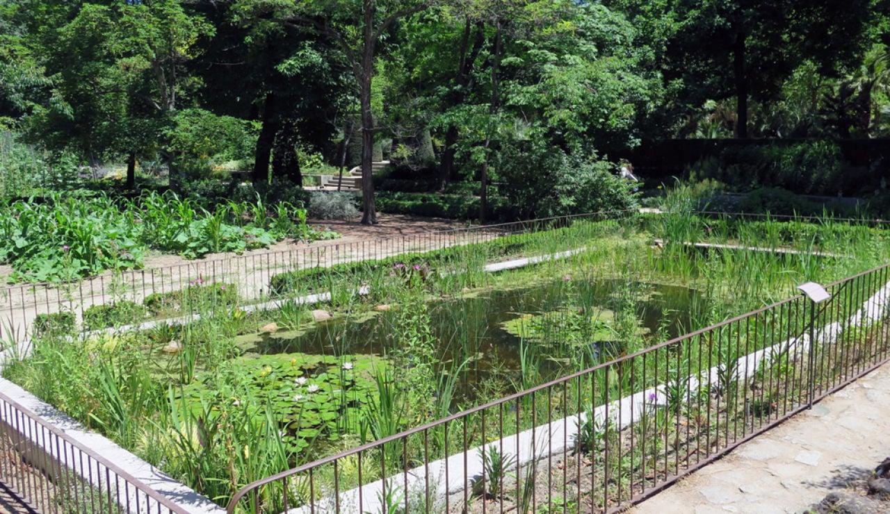 Nuevo estanque del Real Jardín Botánico