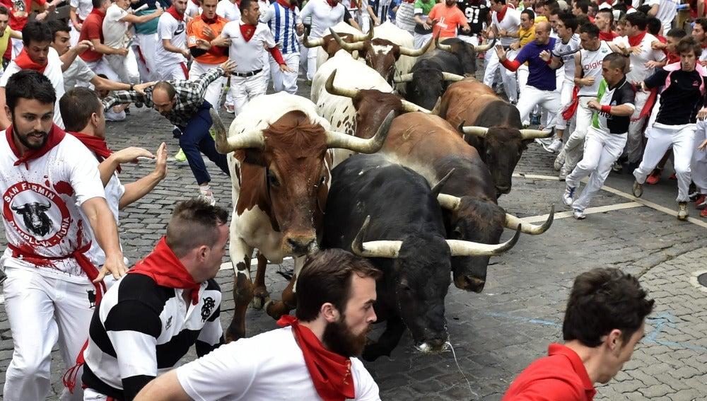 Los toros de la Ganadería del Tajo - Ganadería La Reina llegan hermanados a la curva de Teléfonica