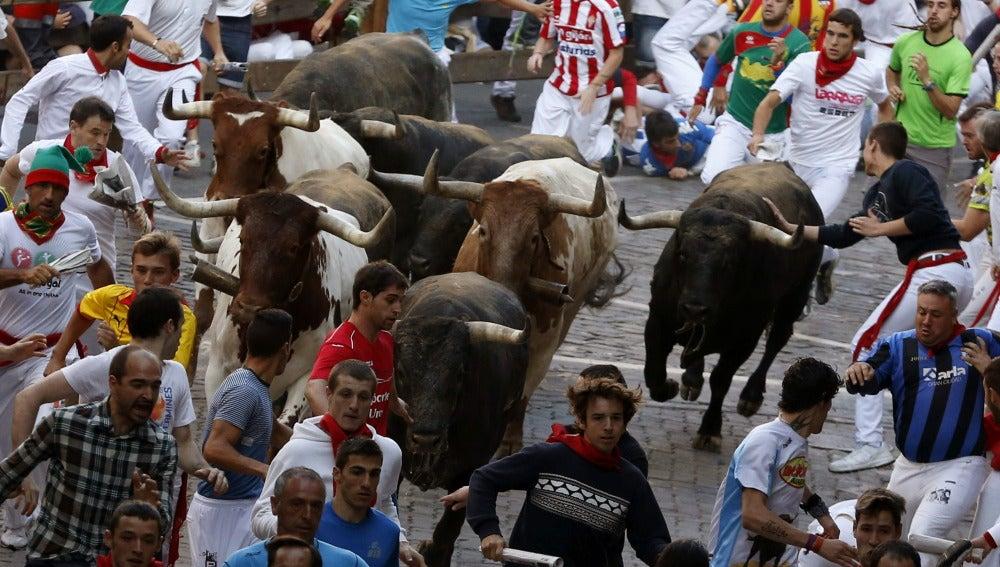 Los mozos corren ante los toros de la ganadería de Miura