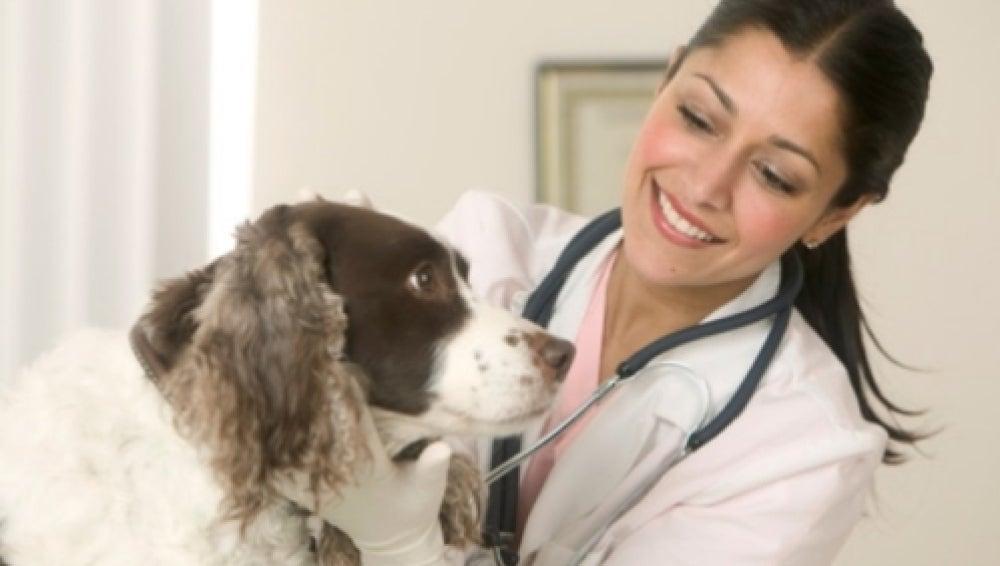 Una doctora con un perro