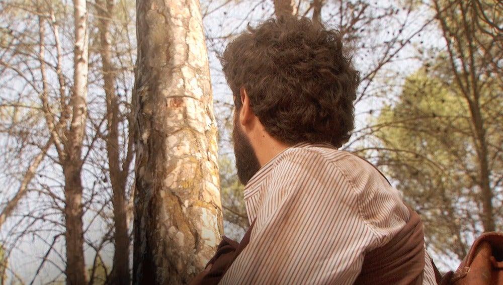 Bosco y Beltrán quedarán atrapados bajo un árbol