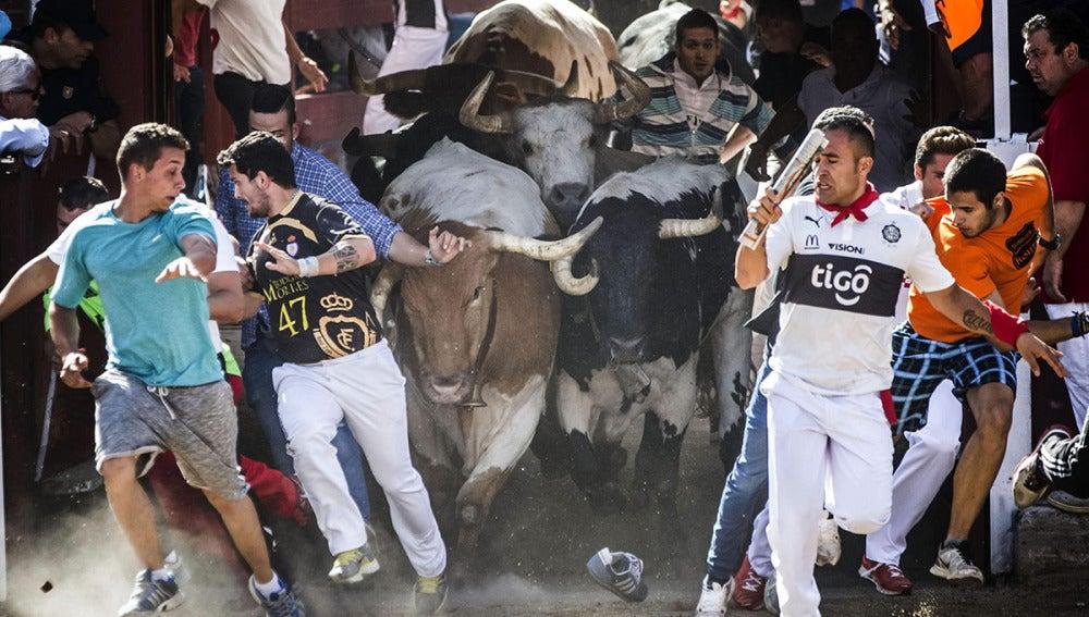 Salida de los toros de los corrales en el sexto y último encierro de las fiestas de San Sebastián de los Reyes