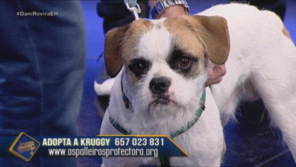 Kruggy el perro abandonado mas viralizado