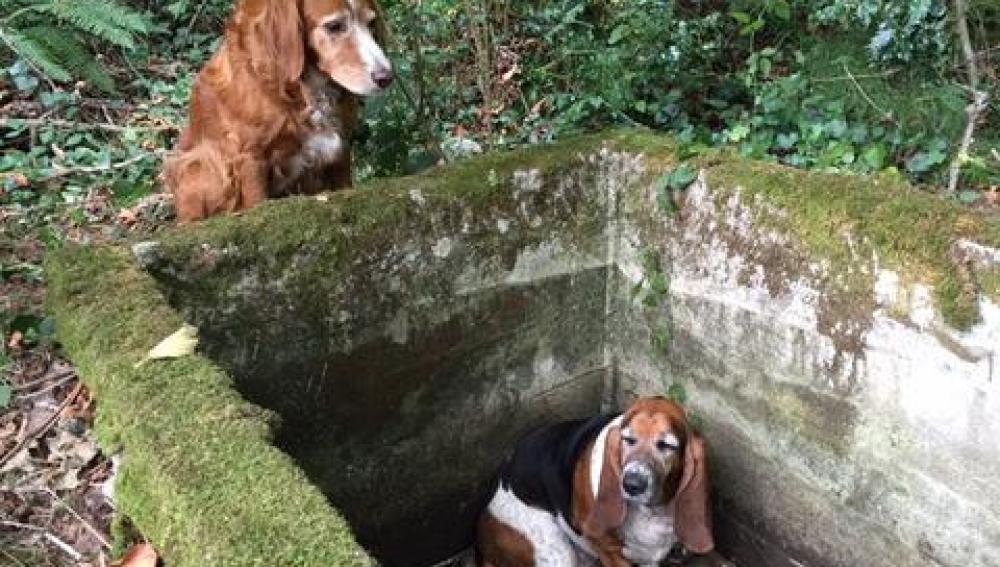 El perro sólo se separaba del pozo para ir en busca de ayuda