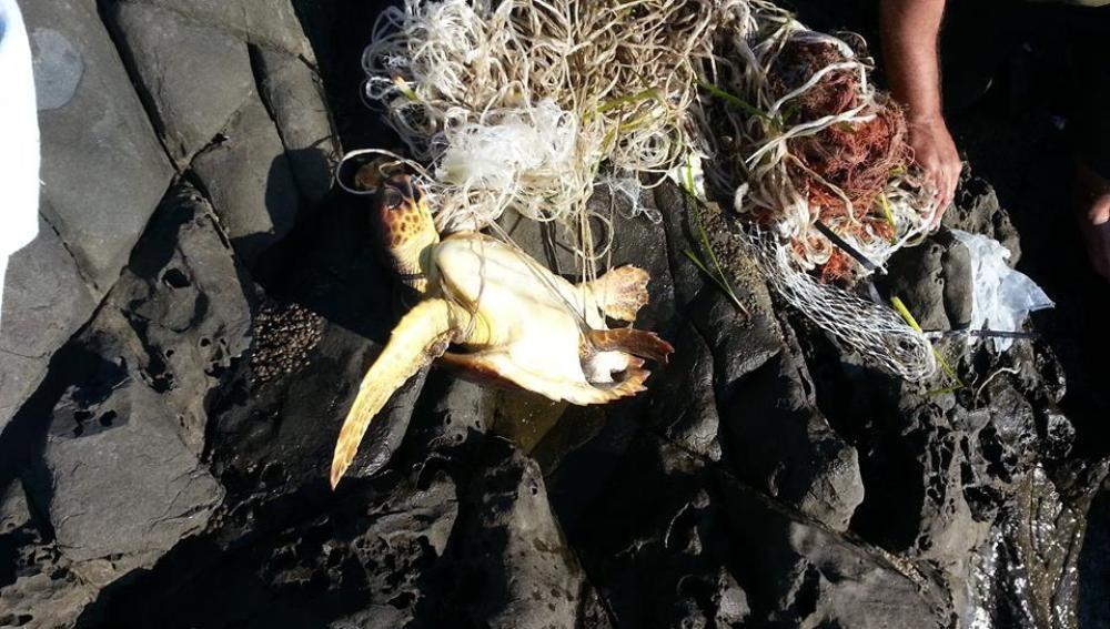 La tortuga presentaba graves heridas en las aletas