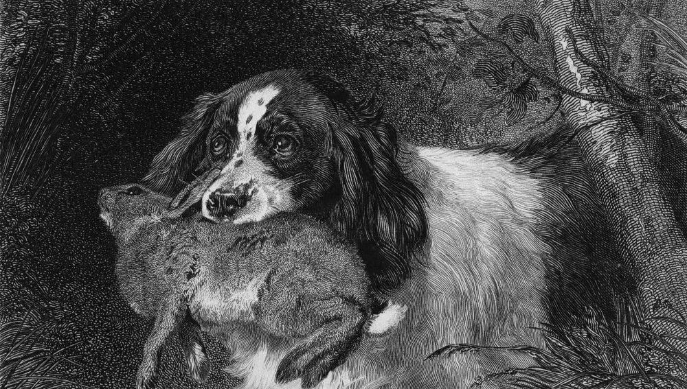 Los perros, ayudantes de los hombres
