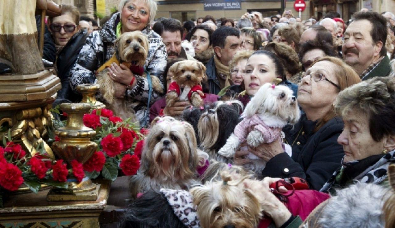 Decenas de animales en las fiestas de San Antón