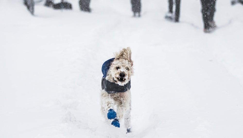 Un perro corre por las calles de Rockville, en Washington