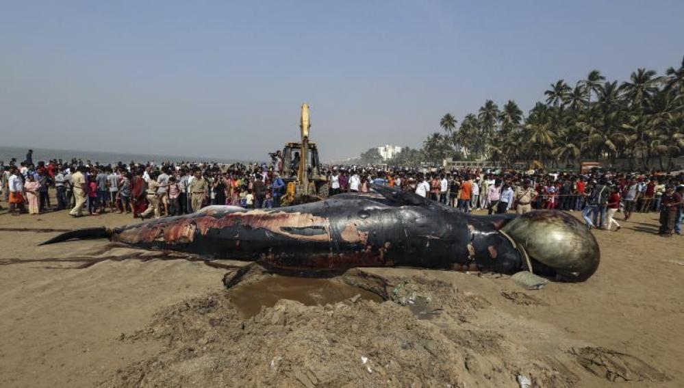 Hallada muerta una ballena de 10 metros en una playa de Bombay
