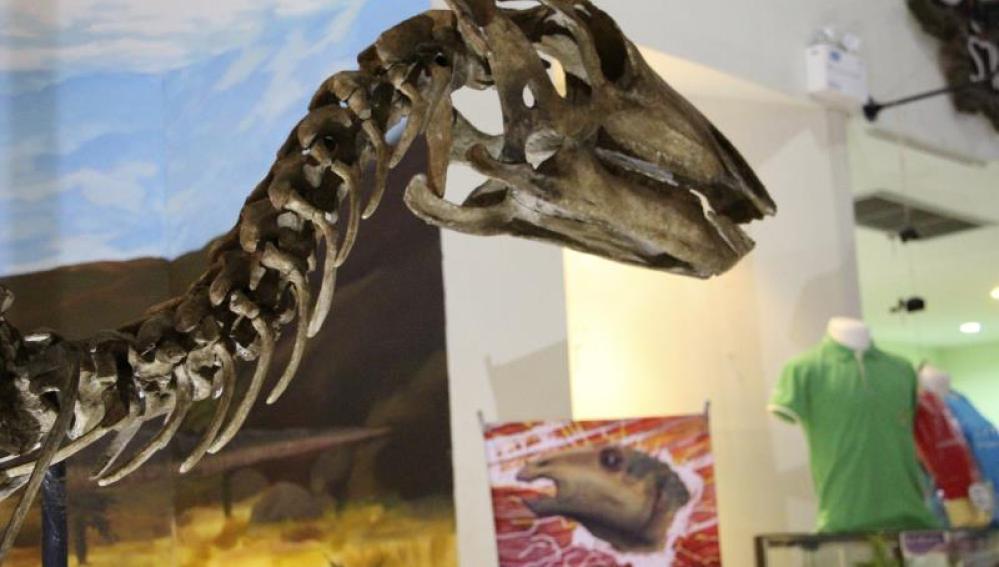 El nuevo dinosaurio se ha convertido en la pieza central del Museo de Fósiles de Khorat