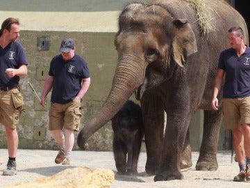 Un elefante con sus cuidadores en el zoo de Munich