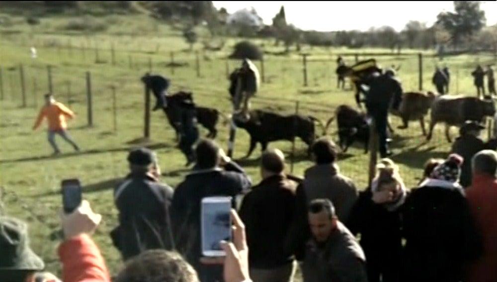 Un padre y un hijo resultan heridos de gravedad al ser corneados por un toro en Ciudad Rodrigo