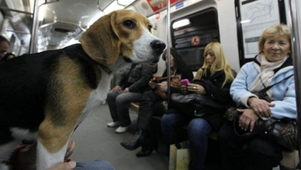 Un perro en un vagón de metro