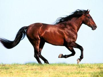 Imagen de un caballo