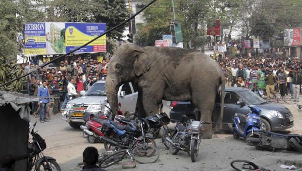 Un elefante siembra el pánico en la India