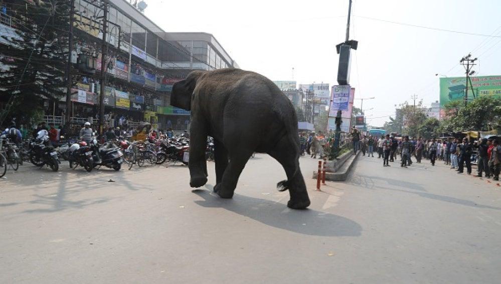 Otro elefante irrumpió el pasado miércoles otro pueblo indio