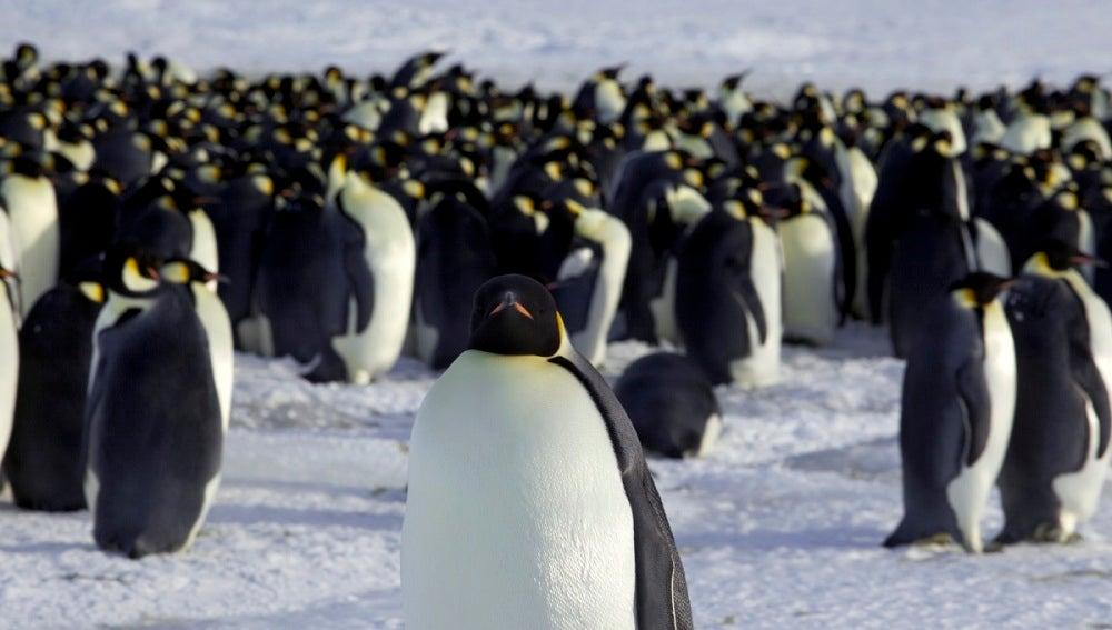 Un grupo de pingüinos en la Antártida