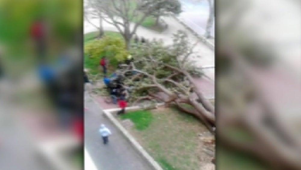 Rescatadas una madre y una hija tras ser aplastadas por un árbol en Gandía