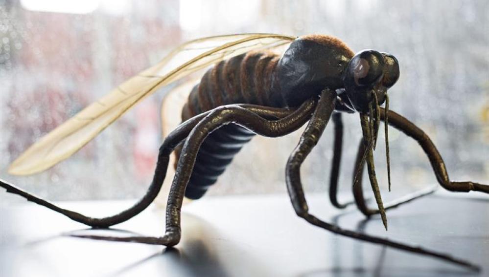 Mosquito en investigación para encontrar medidas contra el virus del Zika