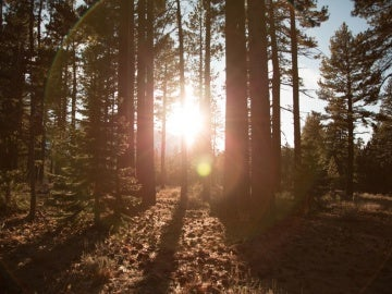 Corre peligro uno de los bosques más antiguos de Europa