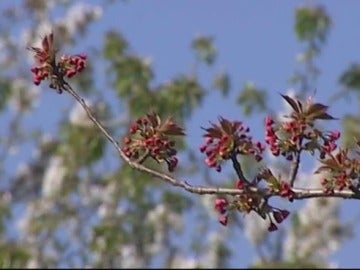 Frame 1.66511 de: La astenia primaveral afecta a uno de cada cinco españoles