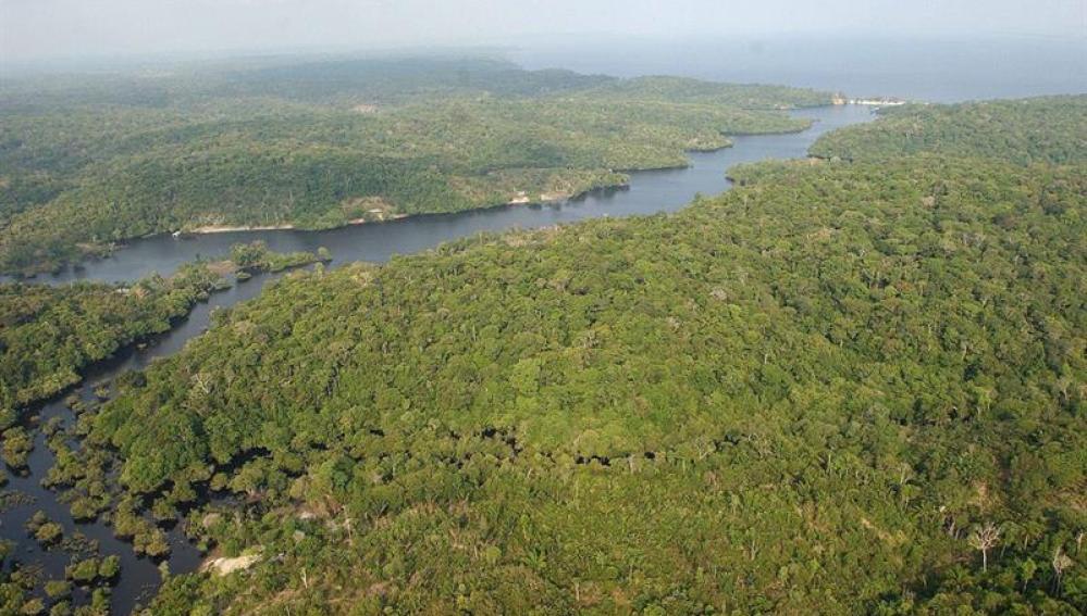La floresta amazónica brasileña