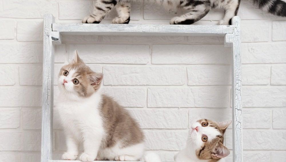 Gatos en escalera
