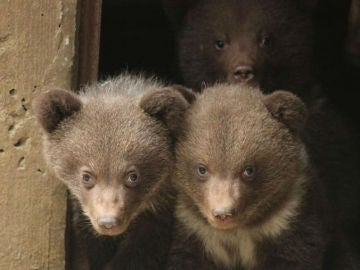 Osos del Aran Park