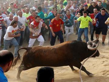 Imagen de archivo del toro enmaromado de Benavente.