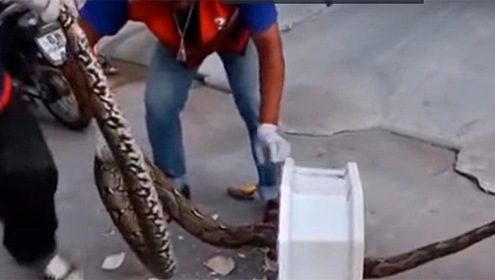 Una pitón de tres metros ataca a un hombre en el váter