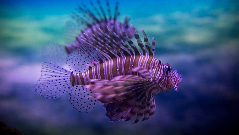 Nadando bajo el mayor acuario de África (01-06-2016)