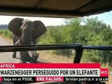 Frame 9.420295 de: elefante