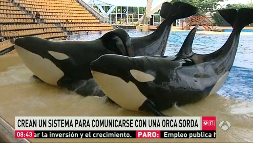 Frame 62.577677 de: orca