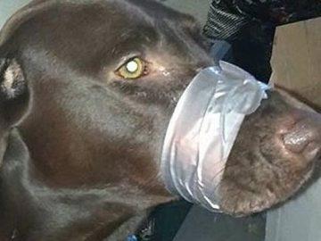 Tapó la boca a su perro con cinta adhesiva