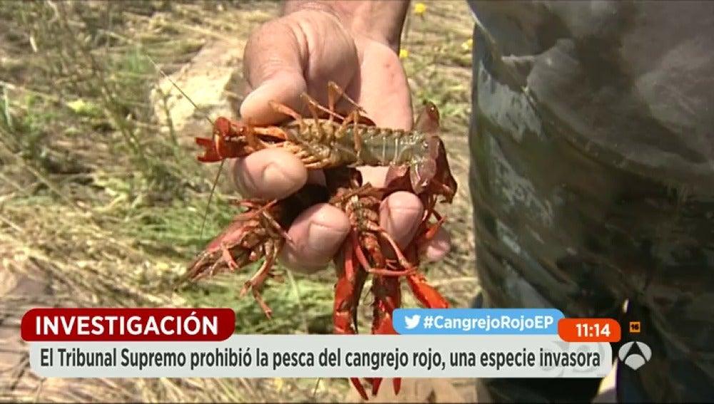 Frame 0.0 de: cangrejo