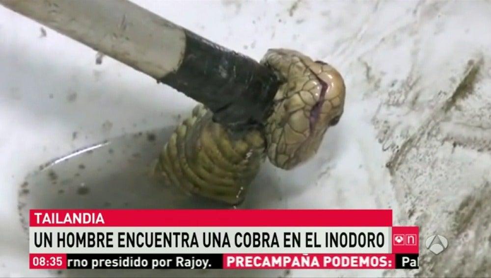 Frame 37.90007 de: serpiente