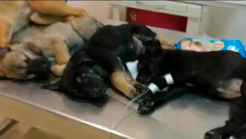 Tres de los cinco cachorros encontrados