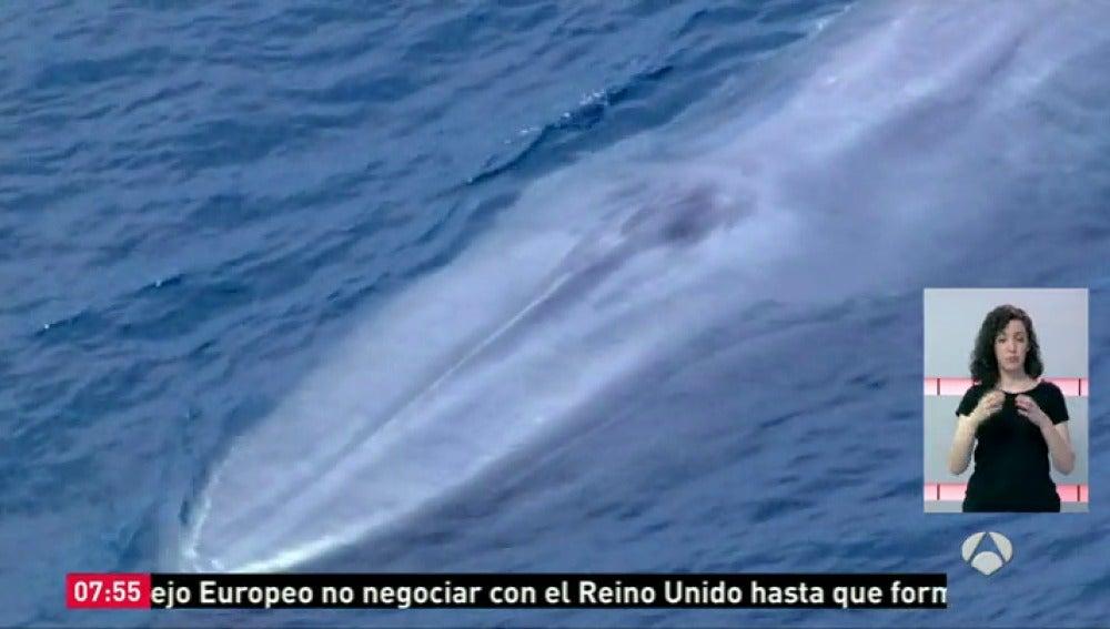 Frame 9.845911 de: ballena