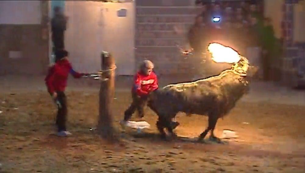 Frame 35.61206 de: Tensión en el ayuntamiento de Valencia por la prohibición de festejos taurinos