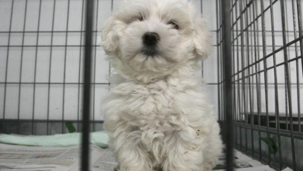Un perro en una jaula - Imagen de archivo